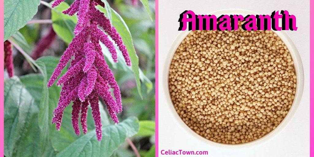 Amaranth gluten free grains graphic