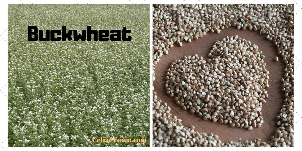 Buckwheat Graphic