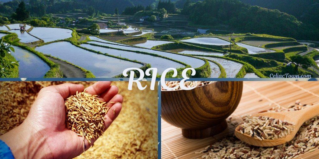 Rice is a GF Grain graphic